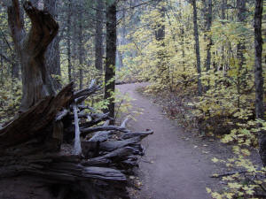West Fork Trail