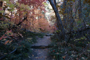 West Fork Trail - Wooded Area